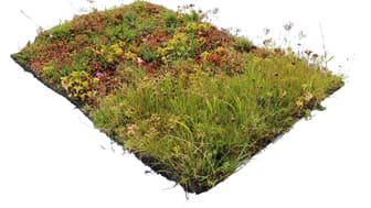 Torrängsmatta med sedum örter och gräs