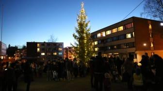SiO tenner julegrana på Kringsjå Studentby. Studenter og naboer er invitert