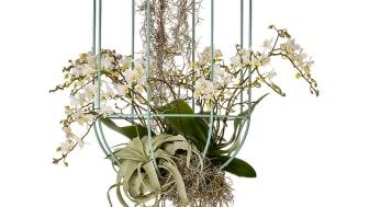 Cacti kokong / Hanging ampel, design Anki Gneib