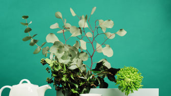 Die neue Thomas Sunny Day Trendfarbe: Herbal Green.