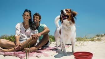 Sommerzeit ist Urlaubszeit. Viele Menschen möchten ihre Vierbeiner dabeihaben. Kein Problem, Hunde lieben das Reisen mit ihrer Familie.
