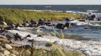 Innovation för en giftfri miljö vid Hanöbukten och Helge Å