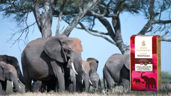 Arvid Nordquist kaffe samarbetar med African Wildlife Foundation (AWF) för att rädda Afrikas elefanter.
