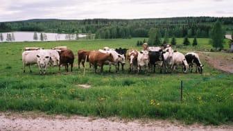 Foto: Torbjörn Pettersson
