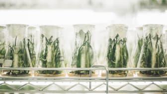 Formas finansierar centrumbildningar för stärkt livsmedelskedja