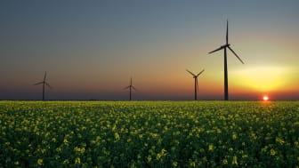Bilden föreställer vindkraftverk i soluppgång  Sandesneben, Tyskland. Credit: Jürgen  Guerito/Wikimedia Commons CCA 2.0