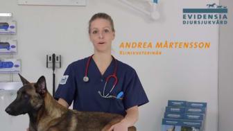 Symptom om din hund blivit förgiftad