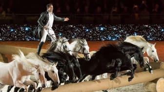 Lorenzo är tillbaka till Sweden International Horse Show i år.