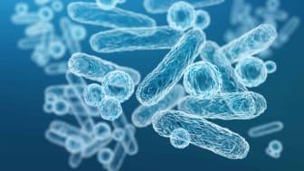 Mikrobiomet – ett nytt sätt att bota sjukdomar och ett allt starkare forskningsområde i Greater Copenhagen
