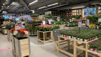 Idag öppnar Blomsterlandets andra citybutik i Hornstull. Det blir växtkedjans 64:e butik i landet.