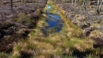 Utdikad våtmark