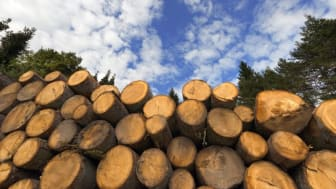 85 miljoner till 21 projekt om forskning för nya skogsråvaror och biomassa