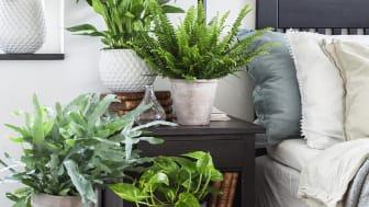 Luftrenande växter för sovrummet