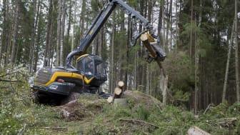 Stora mängder spill blir kvar i skogen vid avverkning. FOTO: TT