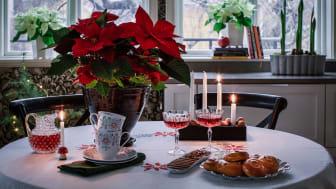 Åsa Myrberg tycker mycket om växter och blommor och här delar hon med sig av sina bästa julstjärnetips, både för hemmet och Instagramflödet.