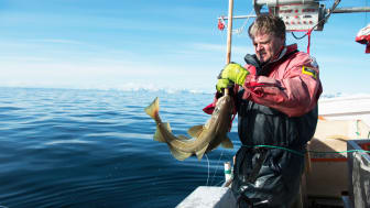 I år øker kvotene globalt med til sammen 11 prosent for våre tre største arter: torsk, sei og hyse. Denne økningen kommer hovedsakelig fra Norge og Russland.