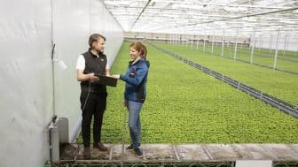 Lisa Lindström, odlingschef på Svegro och Erik Fredlund från Codon Consulting utvärderar datainsamling från pilotprojektet på basilika.