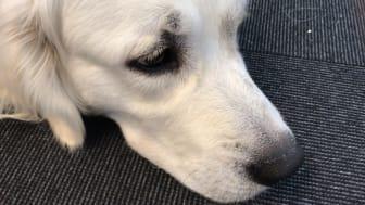 Hundfetma är ett stort hälsoproblem