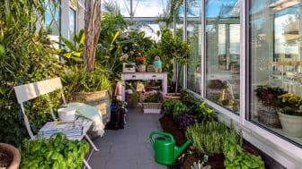 Hemmaodling och intressant växtsamling i ett av Skogskvarterens växthus.