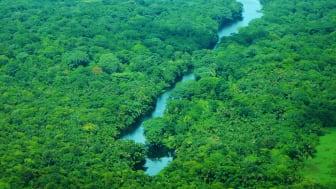 Verdens Skove vil på COP25 arbejde for, at skovene ikke bliver et handelsobjekt i kvoterne for, hvor meget et land kan udlede