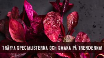 Martin & Servera samlar Norrlands gastronomi