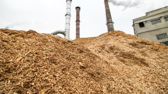 Afbrænding af biomasse kan frigive mere CO2 end kul, fordi det kræver mere biomasse at producere den samme mængde energi. Foto: Shutterstock.