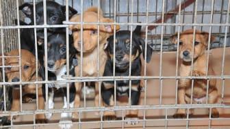Evidensia tar avstånd från illegal handel med djur