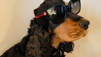 En hund etter briller_ Foto Gjensidige