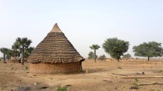 Landsbygden i nordöstra Sydsudan. Över en miljon barn lider av undernäring och förnyade strider har tvingat runt två miljoner människor på flykt. Foto: Anders Malmstigen