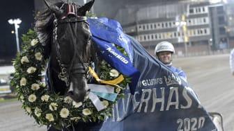 Very Kronos röstades fram till Årets äldre häst på Solvalla. Foto: TR Bild