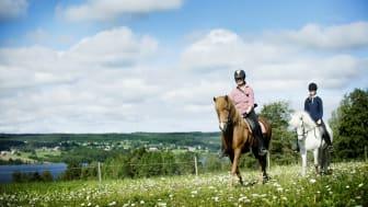 St. Olavsleden on horseback from Sweden to Norway