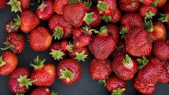 Det er tillatt å bruke så mange som 33 ulike plantevernmidler i norsk, konvensjonell jordbærproduksjon.  Foto: Hanne Stensvold