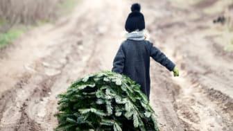 """""""Ensomt juletre søker julegaver"""" arrangeres for niende gang."""