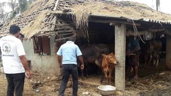 1905-WTG-Odisha-Soforthilfe-Rinder-Unterstand