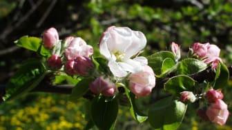 För kallt för blommor och bin
