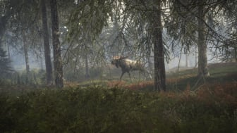 A moose walking among the tall trees.