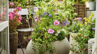Ilmastoälykäs puutarha – Kestävä, lajirikas ja täynnä elämää