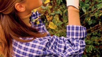 Gør haven efterårsklar nu