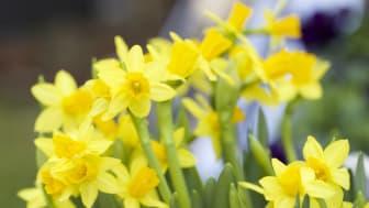Fånga in påsken med blommor och pynt