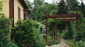 Del av Blixtarnas trädgårdsoas i Frövi (Foto: Samuel Blixt)