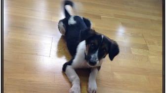 3 Ways to Pet Friendly Flooring