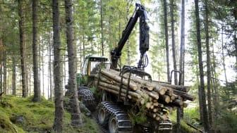 Skog i Norrköpingstrakten. Foto Holmen, Ulla-Carin Ekblom