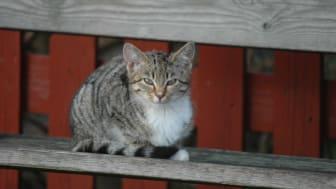 Kattens Værn har i mange år arbejdet for en Kattelov. Sammen har vi nu mulighed for at blive hørt!