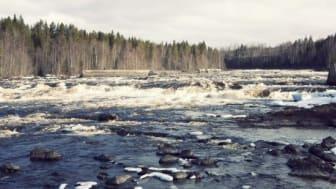 Ändrade regler för kustfisket i Östersjön ska skydda vildlaxen