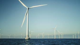 HaV-nej till vindkraftspark: Projektet måste anpassas för att skydda Östersjöns tumlare