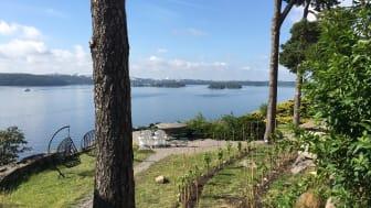 Högberga Vinfabrik tar ännu ett steg närmre kärnan  - odlar egna druvor utanför herrgården