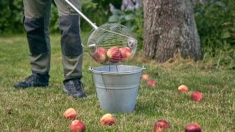 Det 160 cm lange skaftet på opplukkeren gjør det enkelt å plukke opp nedfallsfrukt.