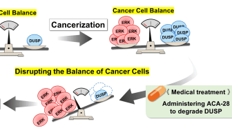 Mechanism of the selective induction of cancer cell-specific cell death by ACA-28 - Kindai University