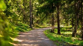 Foto: Länsstyrelsen i Dalarnas län