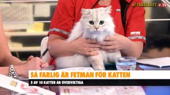 Bild från Aftonbladet TV. Katten på bilden är inte överviktig